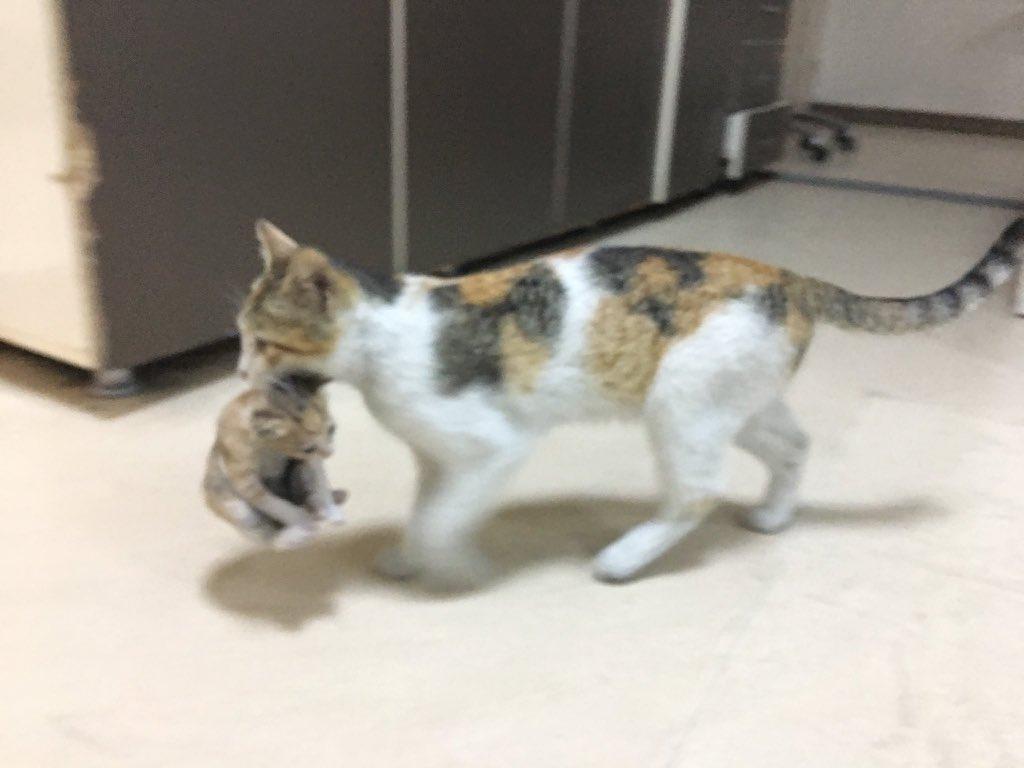 Blog animaux : comment prendre soin d'un chaton ?